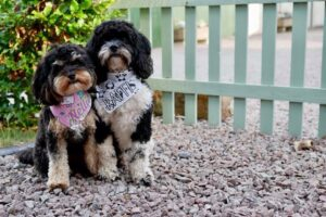 Dog friendly accommodation in Shropshire