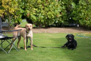 Dog friendly park at Morris Leisure