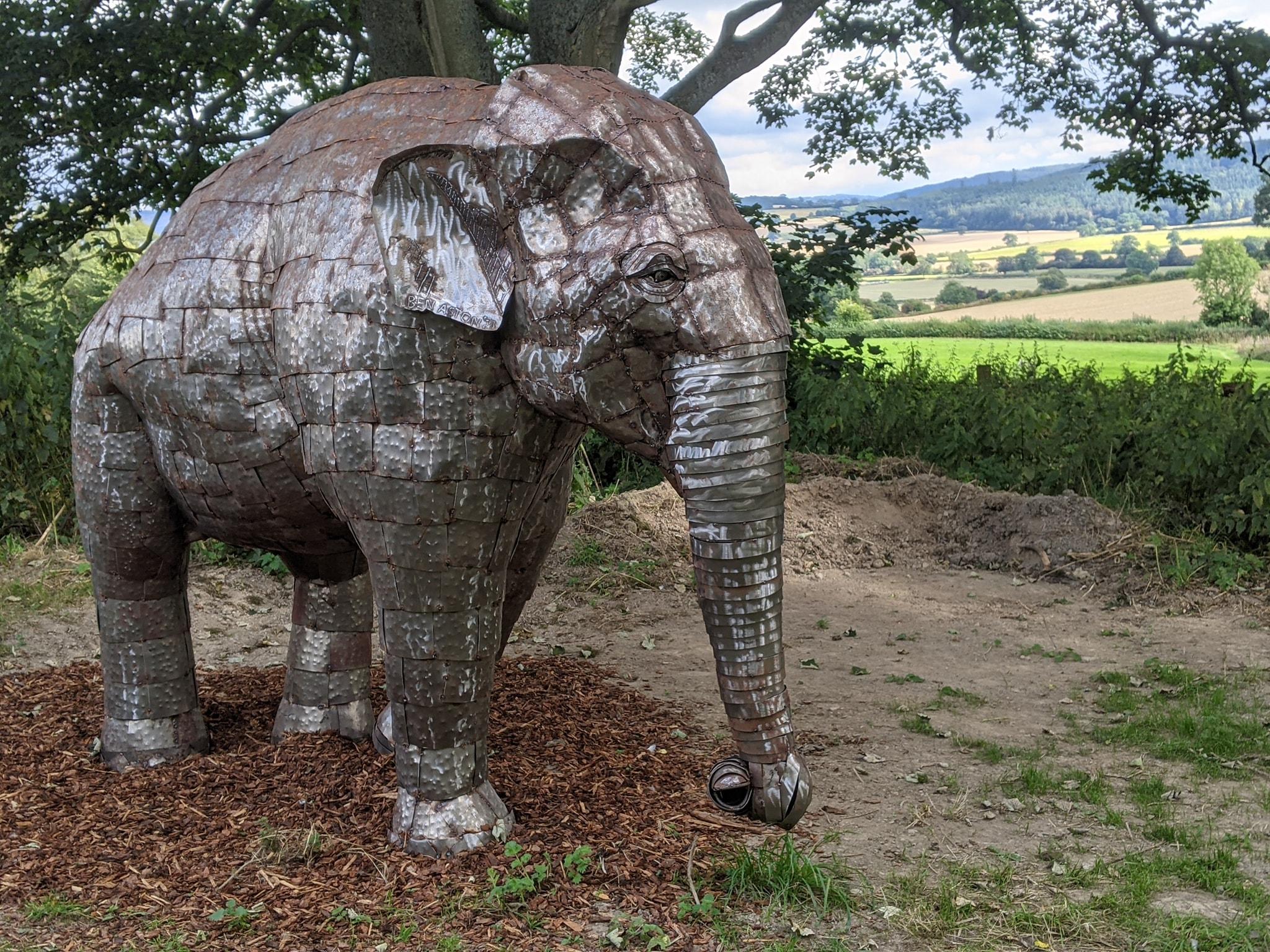 Foxholes Elephant